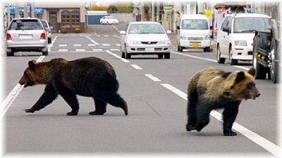 熊、出没注意.jpg